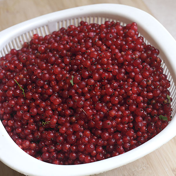 red currants in-colander